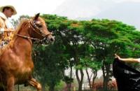 Peruvian paso horse exhibition program
