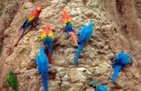 Tambopata Eco Paradise